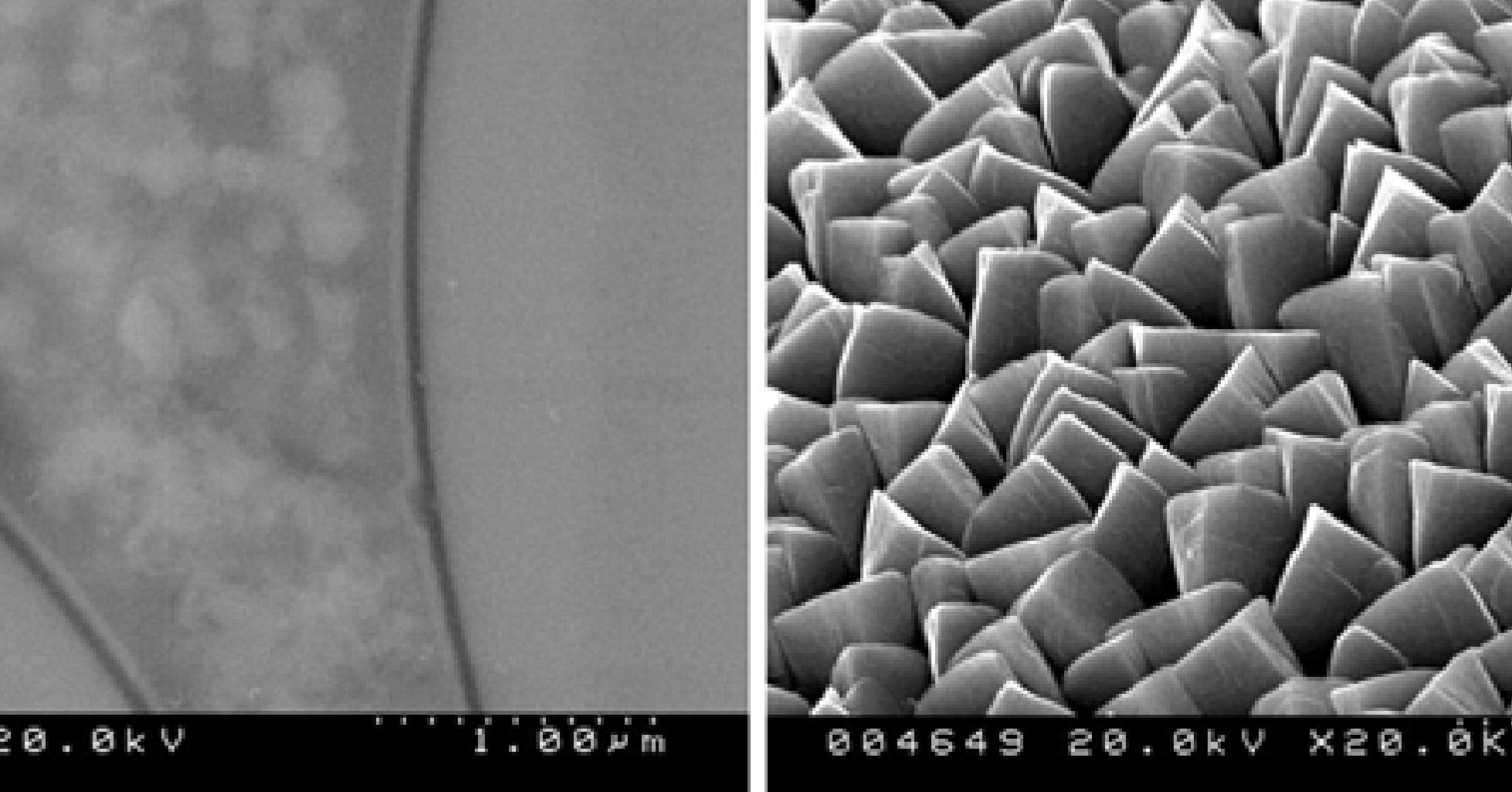 Thí nghiệm thành công Nano Curcumin từ cây nghệ vàng